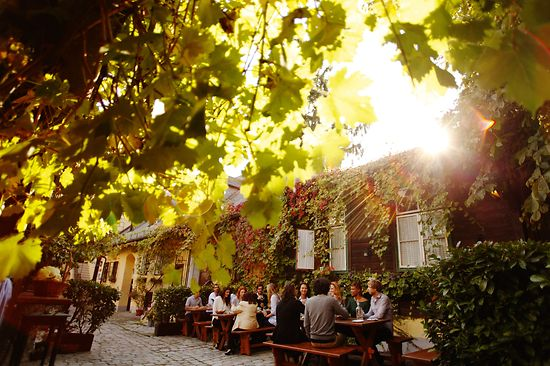 People sitting in the garden of a wine tavern